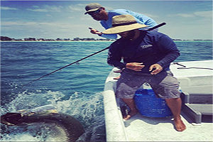 Tarpon fishing spots in Sarasota Florida