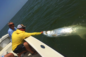 tarpon caught near sanibel and captiva island